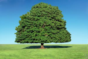 news_forestry_tree